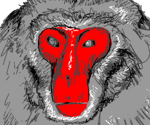 Red-faced Baboon very nicely drawn.