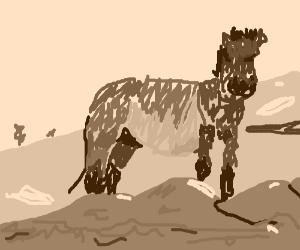 Przewalski's horse (a species of wild horse)