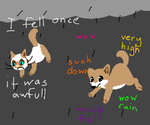 It's raining grumpy cats and doges
