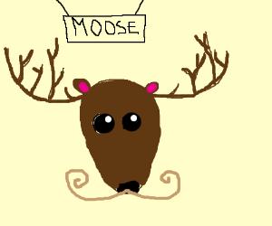 A moostache