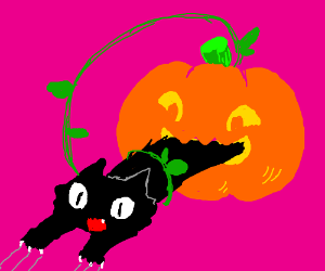 Black Cat Eating Pumpkin