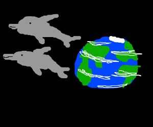 Dolphins leave earth