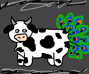 Cow with peacock tail.