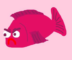 Angry Pink Fish
