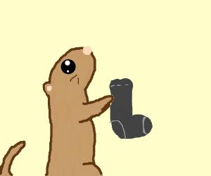 Ferrets visit dryers to steal socks