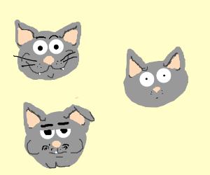 Cat * 3 =