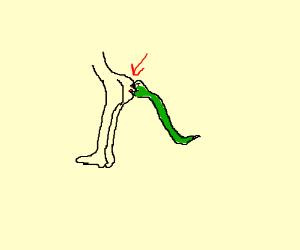 ass-biting snake