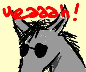 Donkey stars in CSI: Miami