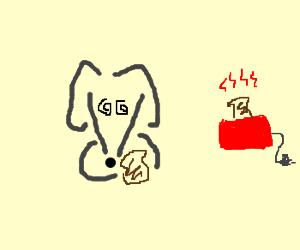 hungry dog eats toast
