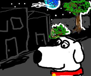 brian the dog at night