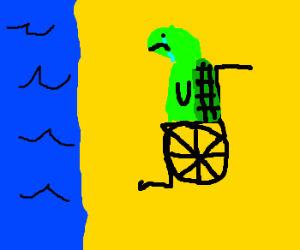 Disabled turtle go to the beach