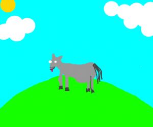 A pregnant donkey..
