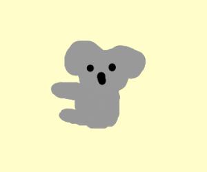 Koala I chose you!!!