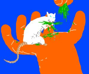 Hamster in someones hand eating veggies