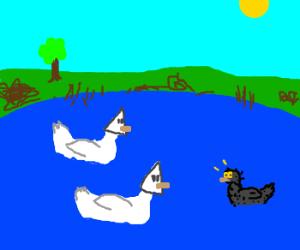 White Duck Supremacy