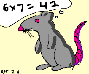 a rat is quite good at calculating 6x7