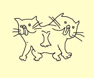A catcat.