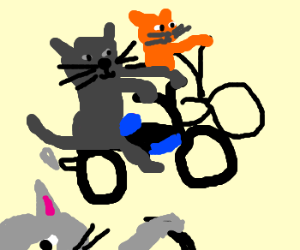 CATS ON MOTORCYCLES!