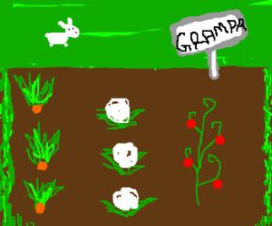 grandpa's vegetable garden