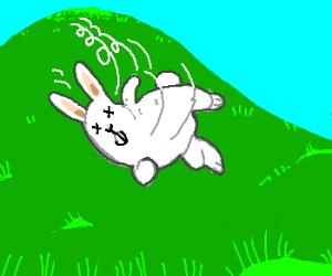 a dead rabbit rolls down a hill toward you