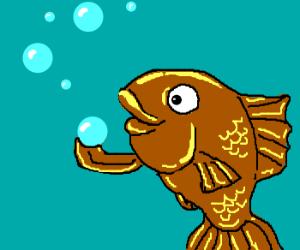 Fish beholds bubbles