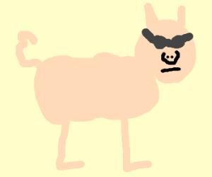 A pig wearing shades
