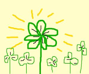 Lucky Seven-Leaf Clover