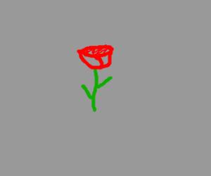 Wait for it rose
