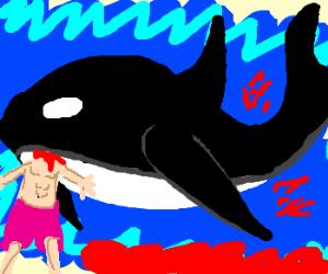 """Killer"" Whale"