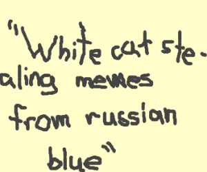White cat stealing memes from russian blue