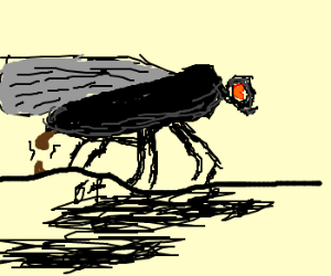 a fly pooping
