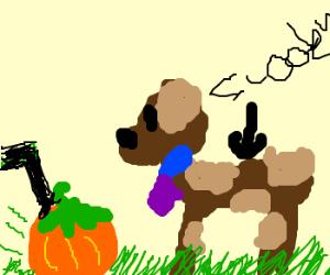 Lawnmower pumpkin, Scooby Doo!