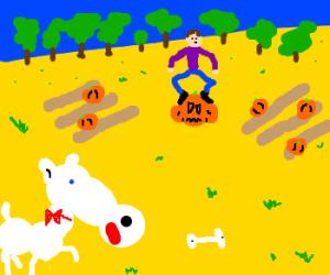 A poodle watching a man step on a pumpkin