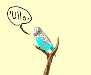 """""""Ullo"""", little parakeet"""