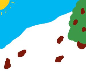 Pine trees adorn ski slope.