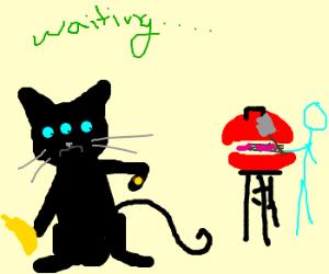 3 eyed cat waiting to grill banana