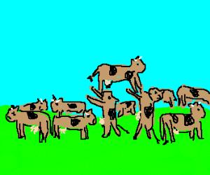 Cowhenge.