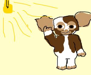 Gizmo no likee the bright light