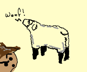 Cowboy is worried about confused sheep.