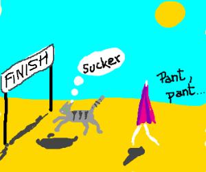A cat races a beach umbrella and wins