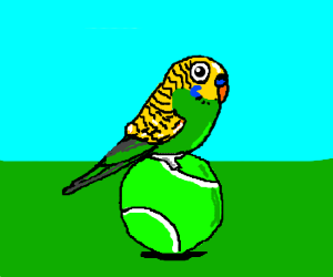 Budgerigar on tennis ball.