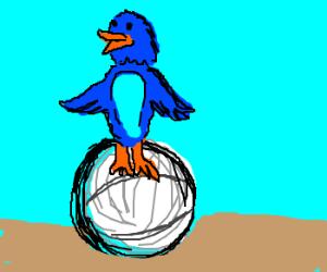 Blue bird on tennis ball