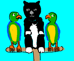 Cat blends in with parrots