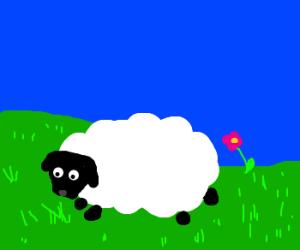 Draw me a sheep.