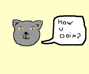 Grey Cat seduces me