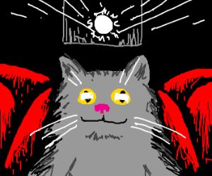 Cat watches film