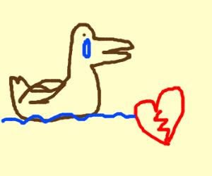 duck is lost for love
