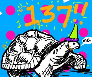 Old tortoise celebrates birthday.
