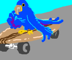 Contemplative Parrot on Old Skateboard