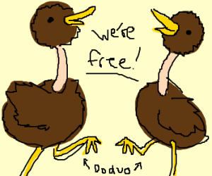 Seperate doduo have a party